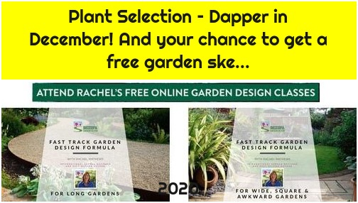 Plant Selection – Dapper in December! And your chance to get a free garden ske...