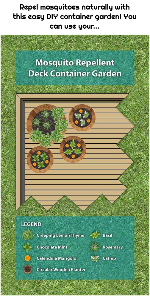 Repel mosquitoes naturally with this easy DIY container garden! You can use your...