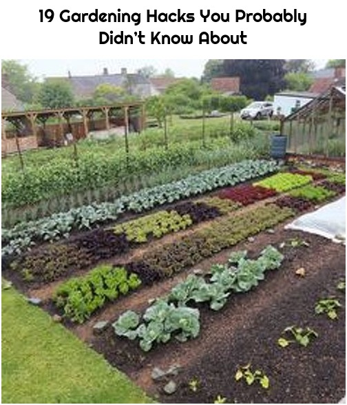 19 Gardening Hacks You Probably Didn't Know About